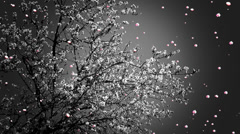 Blossoming Tree Flying Petals Spring  Stock Footage