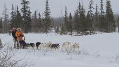 Dog Sledding Northern Canada Artic  - 4 clips Stock Footage