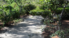 Path in the Japanese garden, shooting in conducting Stock Footage