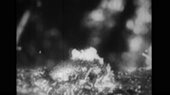 Fungus growing from a decayed banana skin Stock Footage