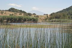 Biviere lake with views of Etna - stock photo