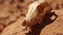 Animal Skull at Goblin Valley State Park Utah Close Up Focus on Eye Socket Stock Footage