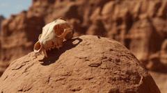 Animal Skull at Goblin Valley State Park Utah Stock Footage