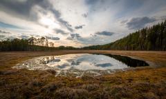 Small lake at a bog Stock Photos