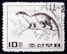 Stock Photo of Postage stamp North Korea 1964 Yellow-throated Marten