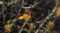 Fly on Mountain flower Stock Footage
