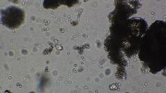 Microscopy Stock Footage