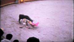 1083 - bull enters looking for a fight & is dragged out -vintage film home movie Stock Footage