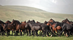 Herd of horses on a summer pasture. Stock Footage