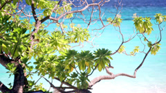 Branch of a tropical tree against the ocean shined with the sun Stock Footage