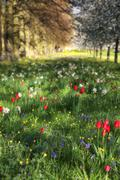 Spring summer flower meadow landscape in dappled sunlight with selective focu Stock Photos