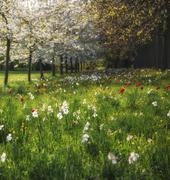 Spring summer flower meadow landscape in dappled sunlight Stock Photos