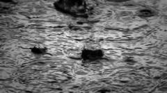 Heavy rain in black Stock Footage