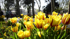 Gulhane Park, Istanbul, people are walking and hanging out, yellow tulips, sunny Stock Footage