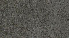Microscopy [sperm] Stock Footage