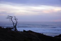 tree snag silhouette at sunset - stock photo