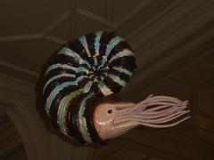 Stock Photo of Ammonite