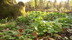 Beautiful low angle tracking shot in forest spring nature background new fresh Stock Footage