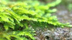 Close Up Moss And Ground With Sharpness Shift - stock footage