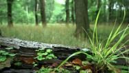 Stock Video Footage of Tracking Shot: Tree Trunk On The Ground With A Spider, Grass and Clover