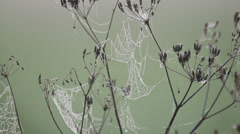 Many cobwebs with dew drops on the grass against blurred background, silence - stock footage