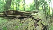 Stock Video Footage of A Tree Trunk Laying On The Ground In A Forest With Moss