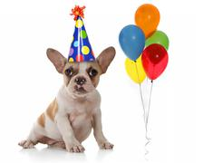 Dog With Birthday Party Hat and Balloons - stock photo