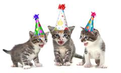 Birthday Song Singing Kittens on White Background - stock photo