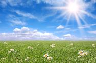 Stock Photo of Serene Sunny Field Meadow in Spring
