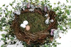 Nest Fantasy Photo Background for Digital Manipulation Stock Photos