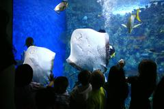 Sting Rays in a Giant Aquarium With Children Watching Stock Photos