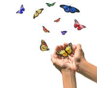 Hands Releasing Butterflies into Blank White Space - stock photo
