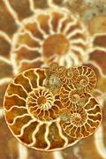 Artistic Fossil Pattern - stock photo