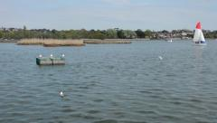 Poole Park Lake in Dorset - stock footage
