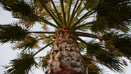 Stock Video Footage of Palmtree, windy weather, sunset, a classic holiday concept