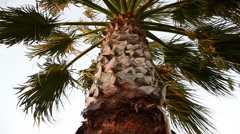 Palmtree, windy weather, sunset, a classic holiday concept Stock Footage
