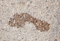 Märkä tulostaa paljas jalka graniitti Kuvituskuvat