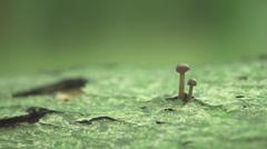 A Tiny Mushroom On A Stump Stock Footage