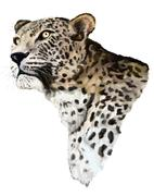 jaguar on a white background - stock illustration