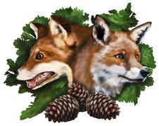 Two foxes on white background Stock Illustration