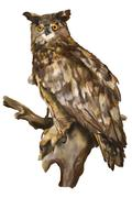 The owl sits on a branch on a white background Stock Illustration