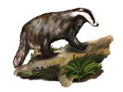 Badger on the trunk Stock Illustration