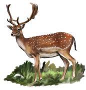 Fallow european fallow deer dama dama Stock Illustration