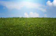 Spring sunlit meadow Stock Photos