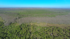 Aerial view of the forrest, Cypress trees and blue skies Stock Footage