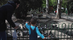 Mother and son feeding hungry pigeons, doves eat seeds in the park Stock Footage