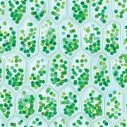 chlorophyll cells seamless pattern - stock illustration