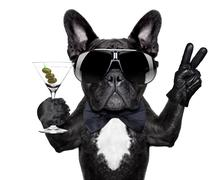 Peace cocktail dog Stock Photos