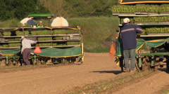California Agriculture, Vegetable crops, restocking planters Stock Footage