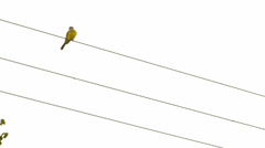 Bird on wire post Stock Footage